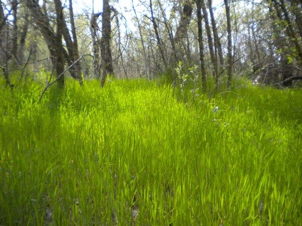 esplendor-en-la-hierba