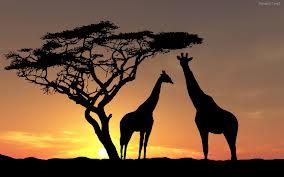 jirafas noche