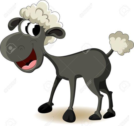 animals oveja