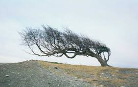 Arboly viento.