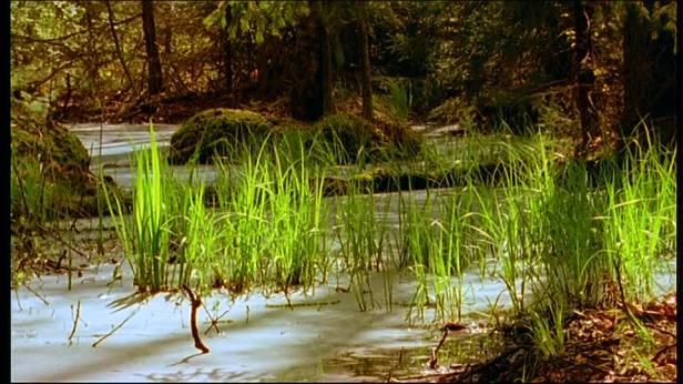 selva pantano