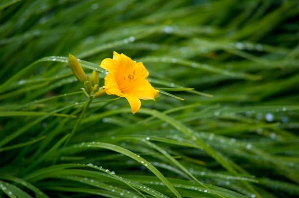 flor bajo el agua
