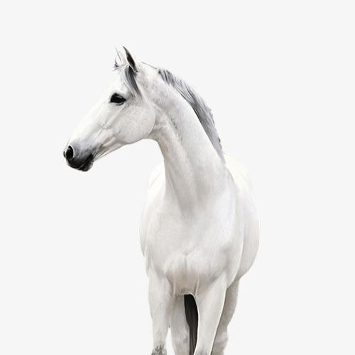 caballo..