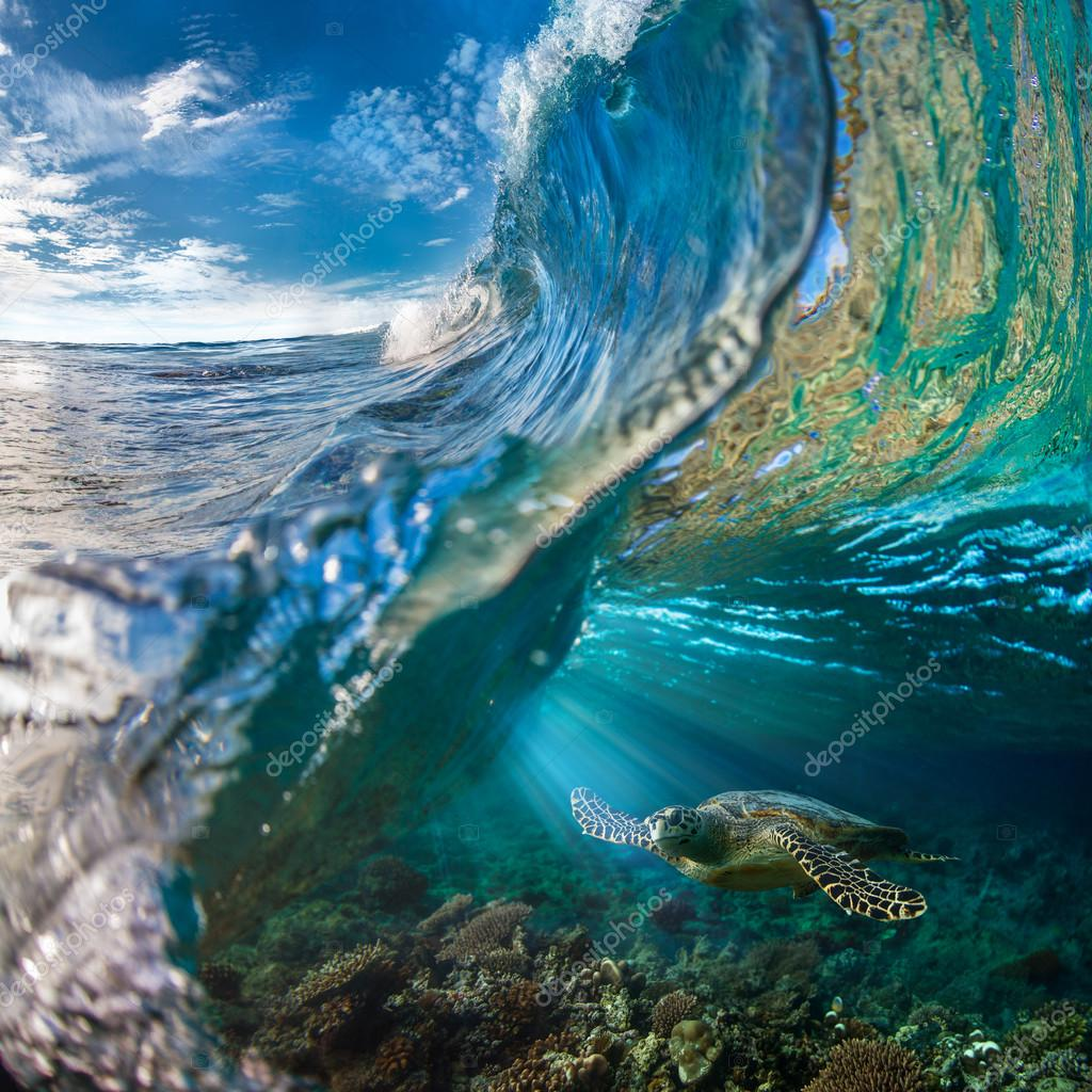 marina y tortuga
